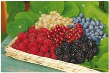 Budino ai frutti di bosco senza zucchero