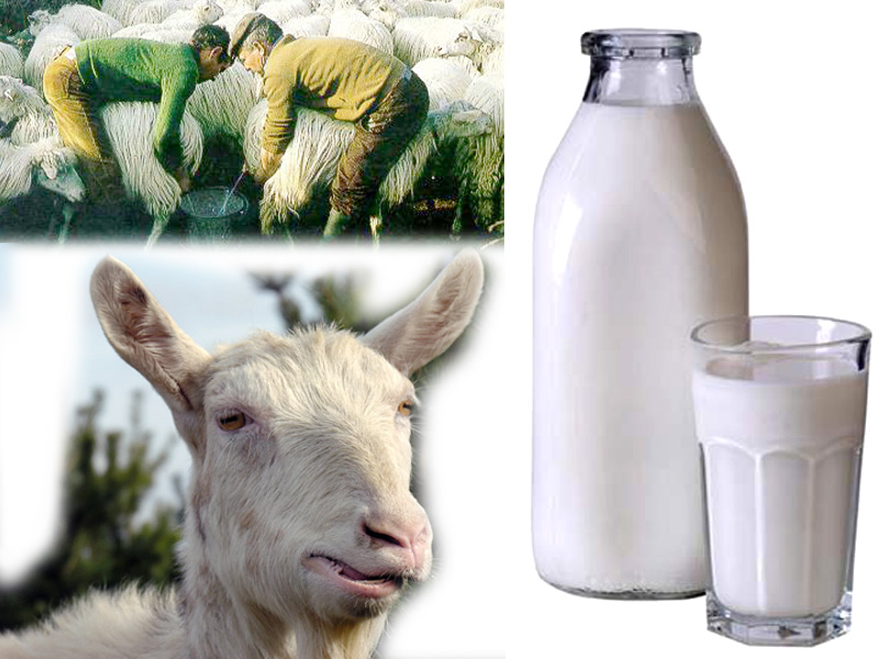 latte_capra.jpg